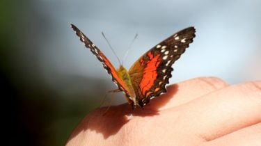 butterfly-on-hand